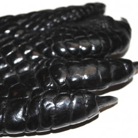 Кожа Лапы крокодила